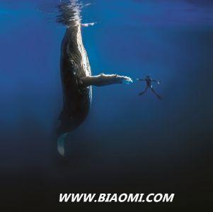 """BLANCPAIN宝珀""""心系海洋""""巡回主题展亮相上海"""